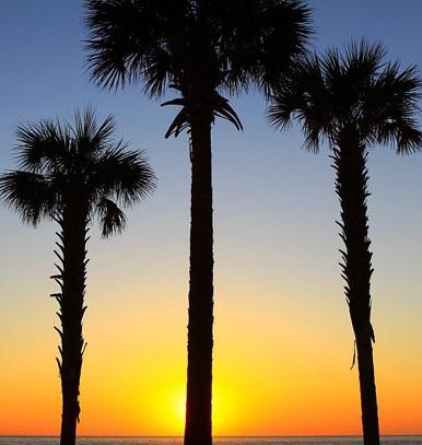 The Honolulu Files - palm trees
